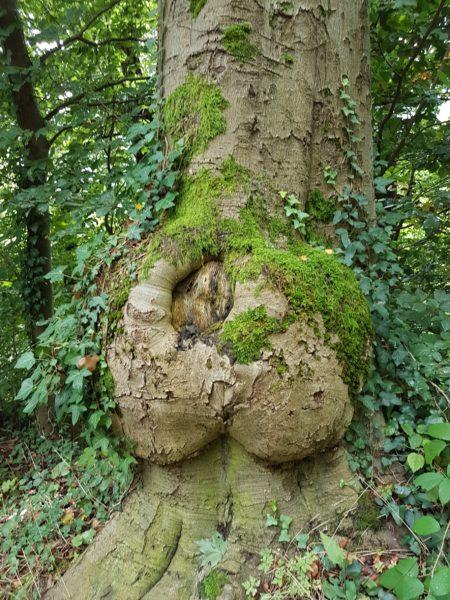 Baum mit Po