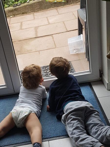 Zwei Jungs schauen liegen zur Terrassentür raus.